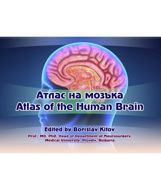 Атлас на мозъка Atlas of the Human Brain